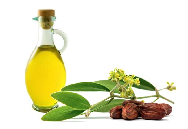 5 công dụng làm đẹp tuyệt vời của dầu jojoba