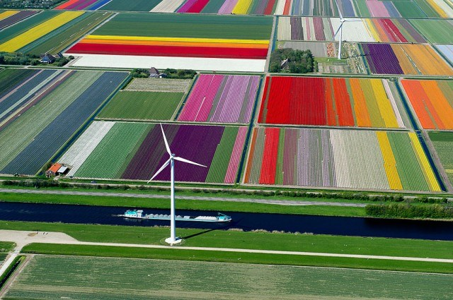 Tulip Fields, The Netherlands - cánh đồng hoa tu lip