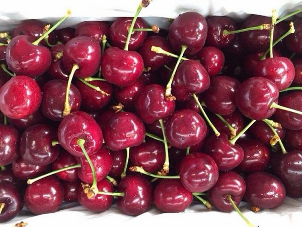 cherry-my-1__copy__grande